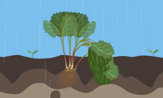 《农作物耕种科普片》
