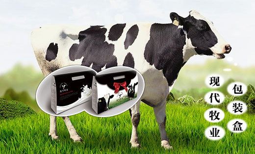 现代牧业包装盒设计